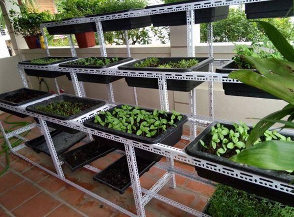 Kệ sắt v lỗ đa năng trồng rau sạch tại gia đình